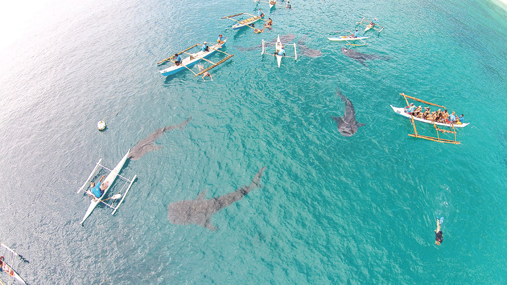 Whale-shark-watching-in-Oslob